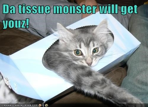 scary cat funny monster