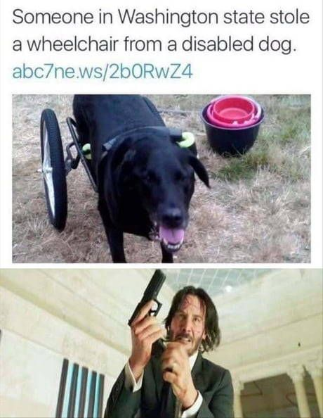 Well maybe the person who stole had a disabled dog too but couldn t afford fucking wheelchair so they stole from Richards owner who could afford a second