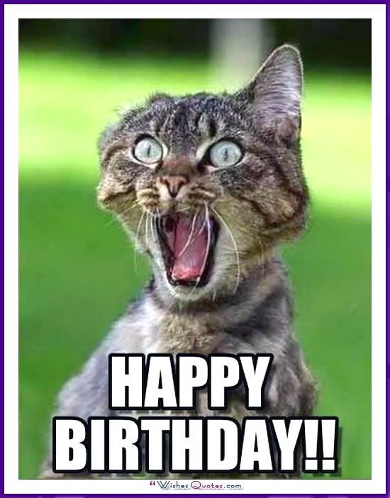 Birthday Meme with a Cat Happy Birthday