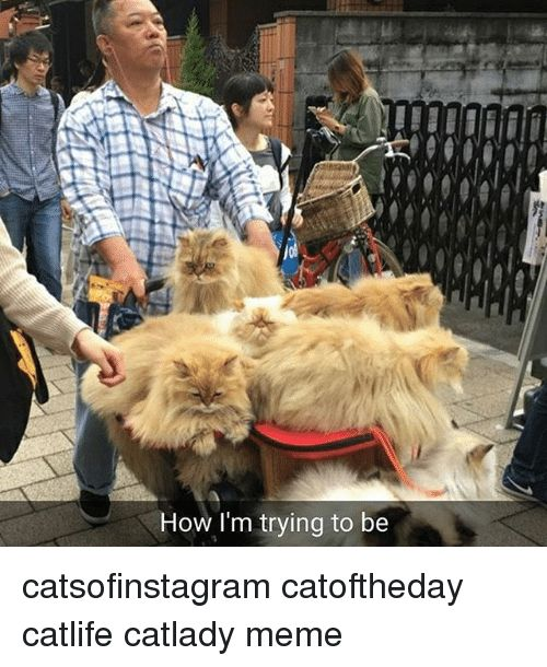 Meme Memes and 🤖 How I m trying to be catsofinstagram catoftheday · catsofinstagram catoftheday catlife catlady meme