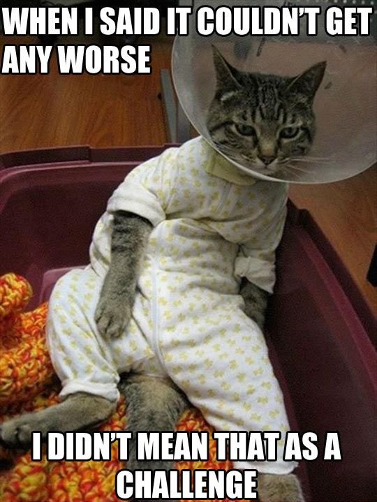 Sick Cat Meme