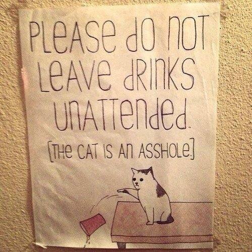 Haha Funny Lol Funny Cats Funny Stuff Funny Animals Freaking