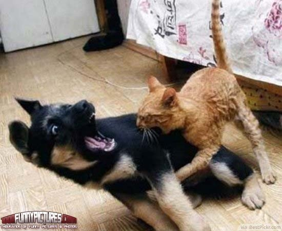 Angry Cat Biting Scared Dog Funny Picture ❥❥❥ ing dog