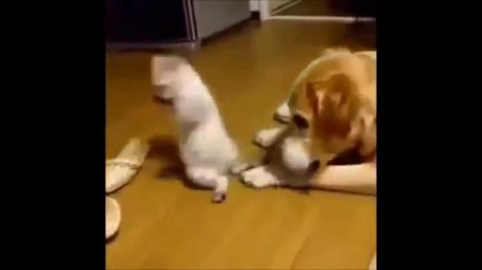 Cat vs Dog Funny Cat Videos for
