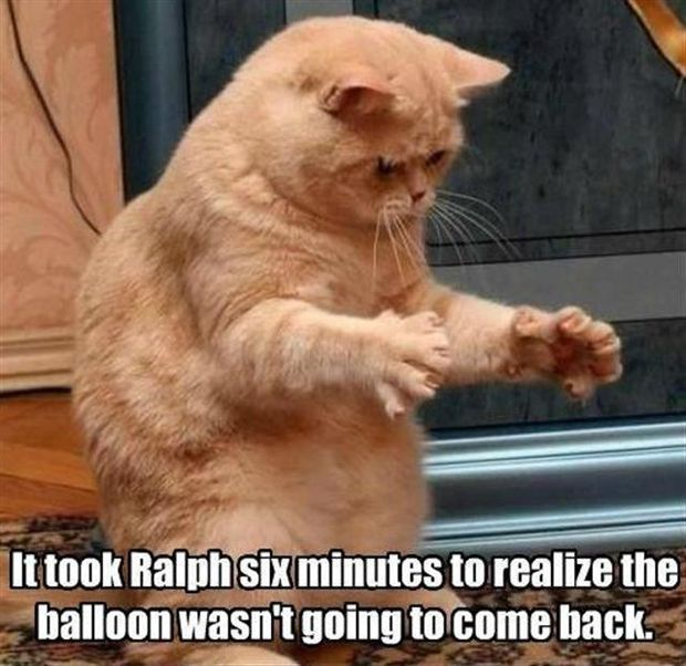 It took Ralf the cat six minutes to realize the balloon wasn t going to e back