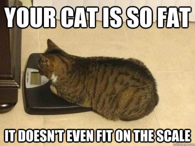 Your cat is so fat it doesn t even fit on the scale