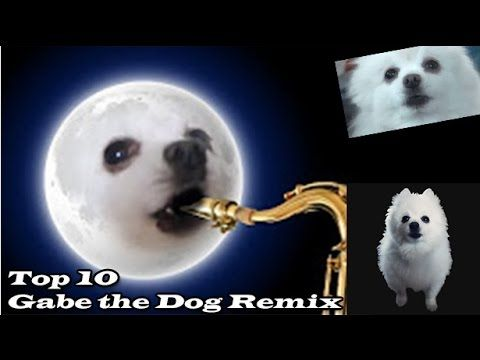 Catch the Beautiful Funny Gif Dog Memes 2017