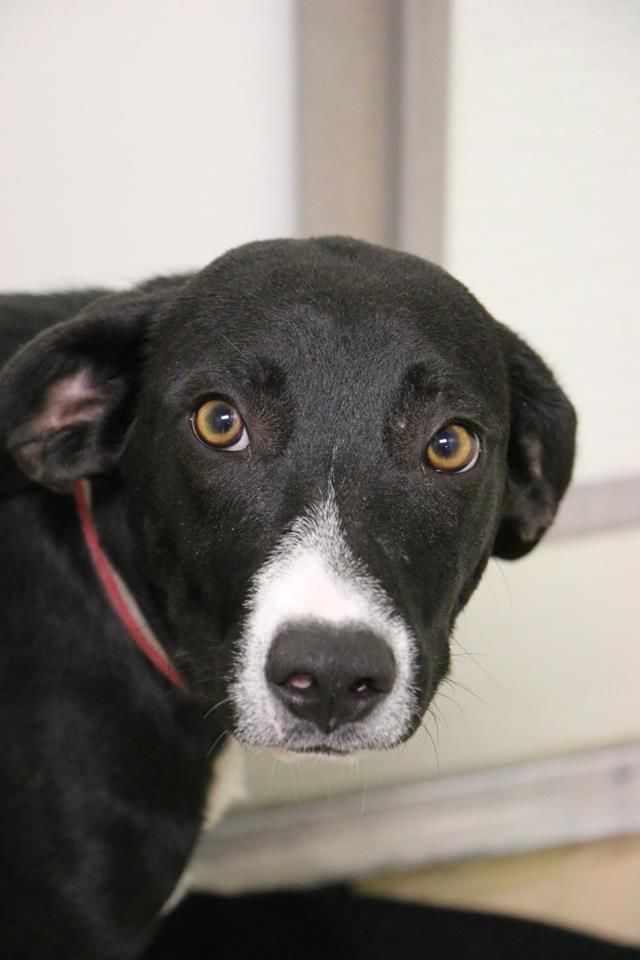Cedar Bend Humane Society to receive 52 dogs from Oklahoma Saturday Local News