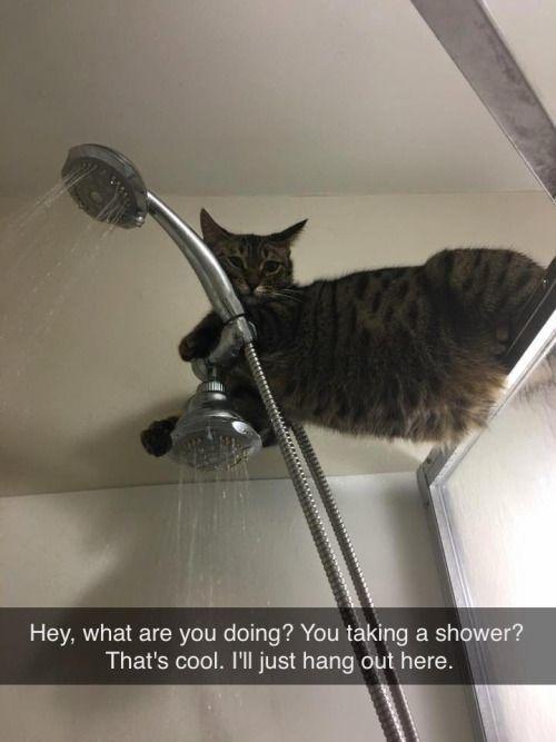 Funny cat memes cat