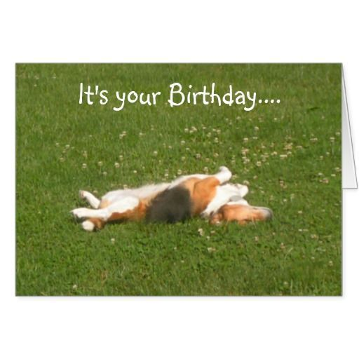 Beagle Birthday Card Funny