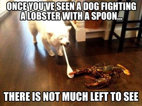 dog fighting lobster spoon funny cute cat dog