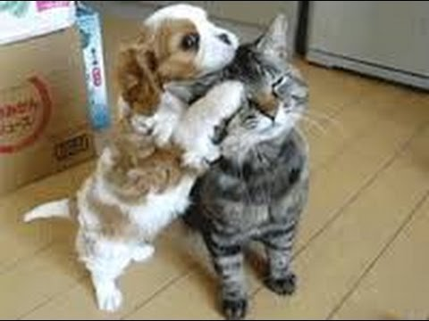 Funny and naughty cats video watch funny cat vs funny cat and dog