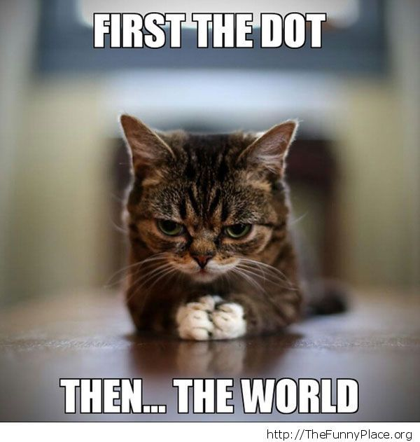 New World Order Cat
