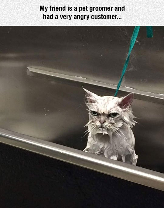 funny angry cat bath
