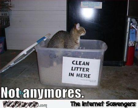 Funny clean litter box meme