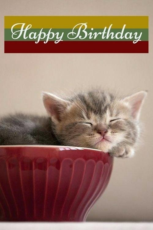 Funny Cat Birthday Cards Happy Card Quotes Ecards