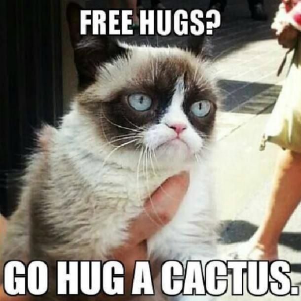 Download The Wonderful Funny Valentine Cat Memes Hilarious Pets