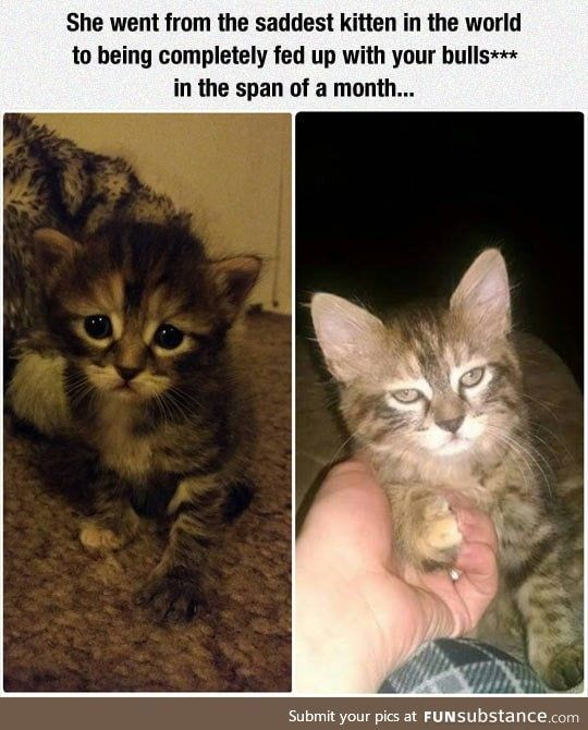 In just the span of a month Humor Pinterest