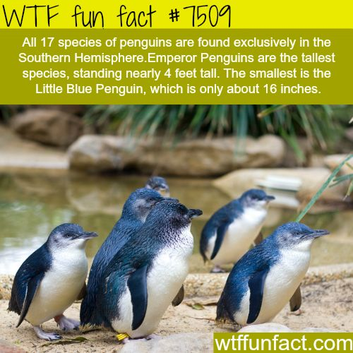 WTF Facts funny interesting & weird facts
