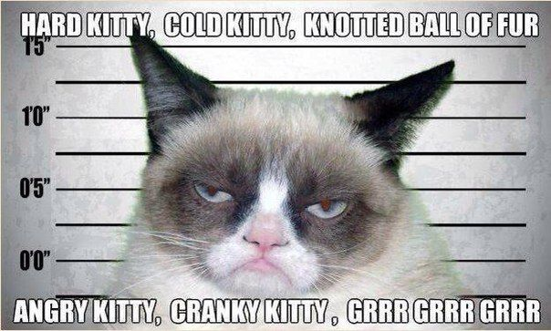 funny pictures grumpy cat song