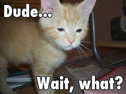 Crazy Funny Cat Pics