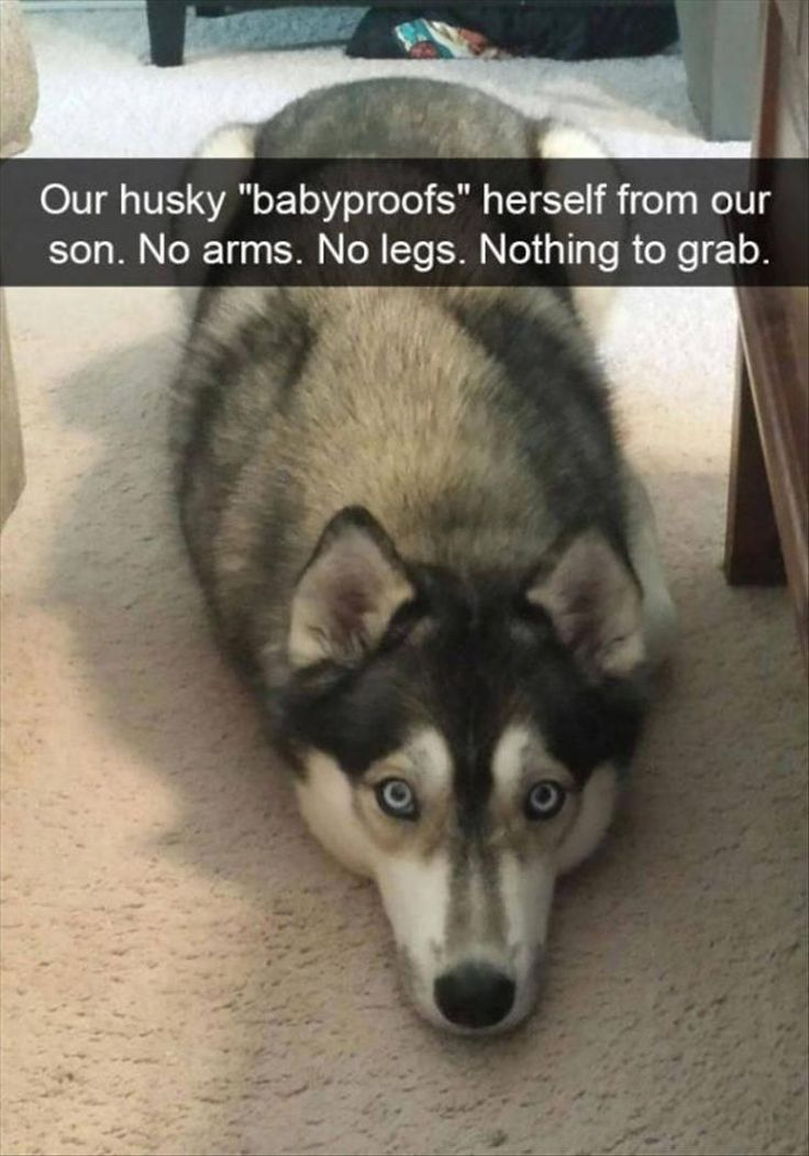 Funny Animal The Day – 28 Pics