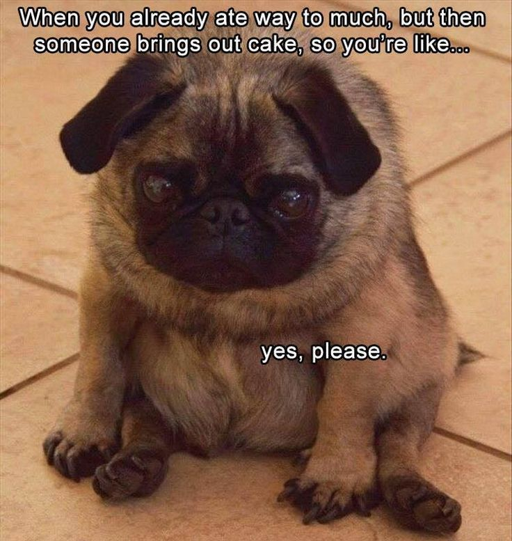 Funny Animal The Day 22 Pics
