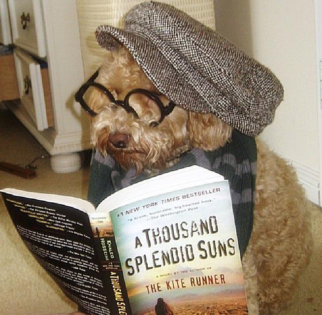 reading dog 58b8aa265f9b58af5c51d775