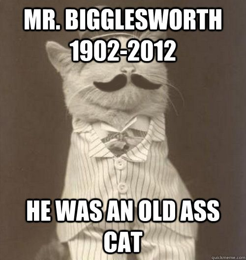 Mr Bigglesworth 1902 2012 He was an old ass cat