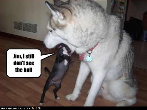 Funny Cat And Dog With Words