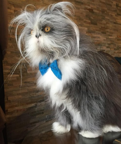 When Nathalie C´té posted a photo of her pet on Twitter earlier this month a debate erupted over whether the adorable furball is a cat or a dog