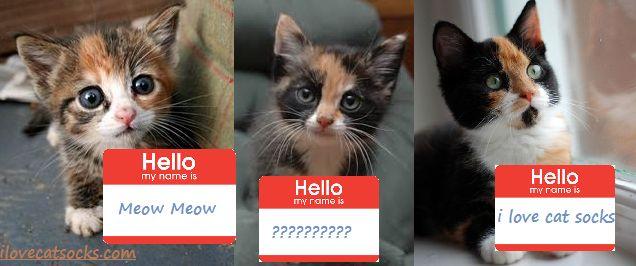 calico cat names 1024x1024
