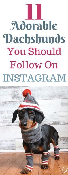 11 Adorable Dachshunds You Should Be Following Instagram