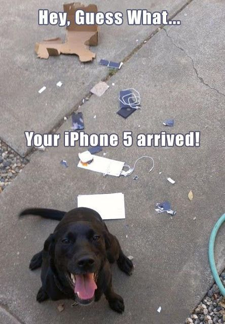Funny Dog iPhone Arrived Picture More