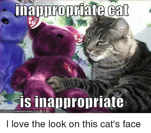 Memes 🤖 and Cat Face propriate Cat is inappropriate CANHRSCHEEZE URGER