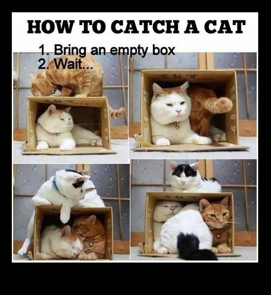 How to catch a cat 1 bring an empty box 2 wait