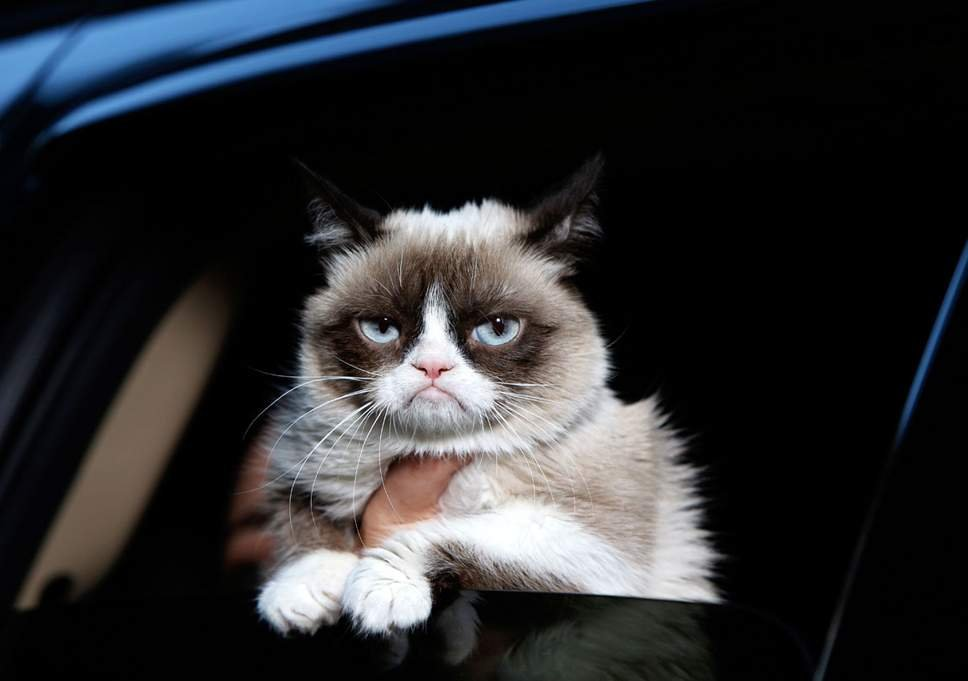 Grumpy Cat aka Tardar Sauce would probably ignore you too