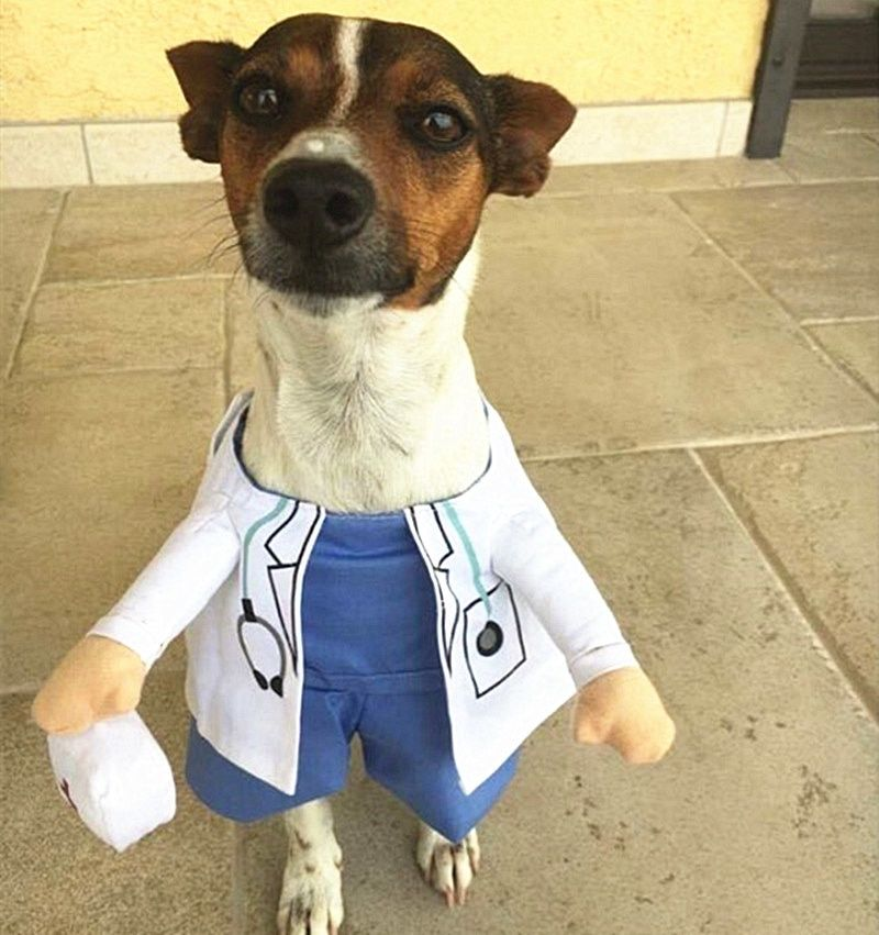 Doctor Dog Costume Sets Funny Police Dog Costume Clothes Coat Jacket for Small Dogs Cute Pet Chihuahua Sets 12cy4S2 in Dog Coats & Jackets from Home