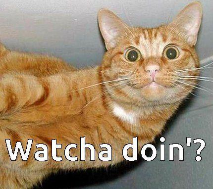 funniest cat memes