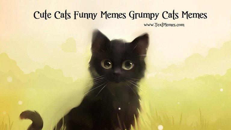 Cute Funny Cat Memes