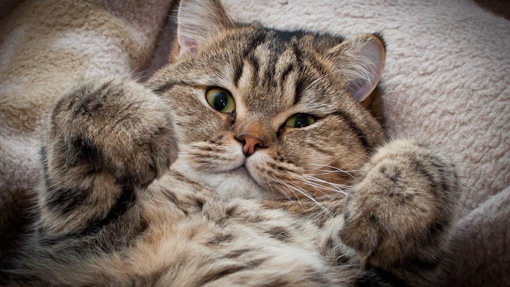 Funny Cat Wallpapers for Desktopfull size funny cat