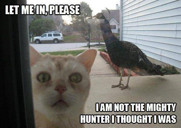 Lawlz Laugh out loud on this humor site with funny pictures and internet memes bird