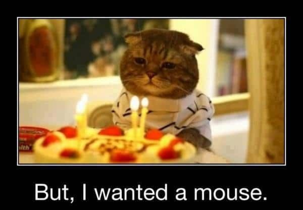 Catch the Fresh Funny Cat Birthday Pictures for Cousin