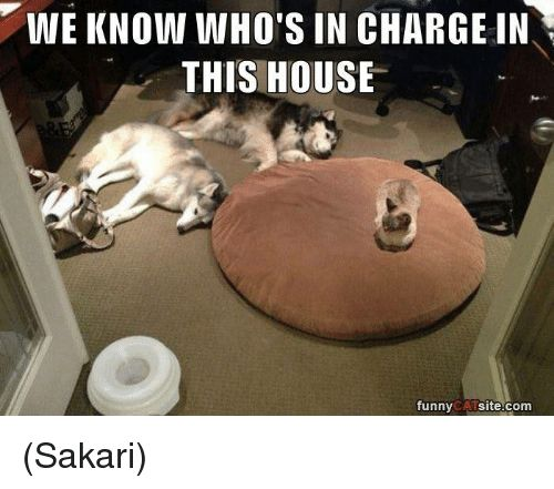 Catch the Fresh Funny Cat Dog Beds Pictures