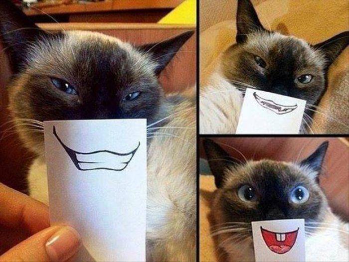 Grumpy cat is finally happy