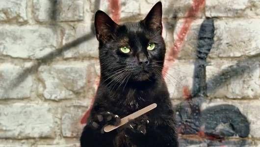 cat using nail file