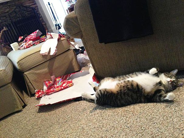3 My Cat Ripped Open All The Presents Christmas Morning
