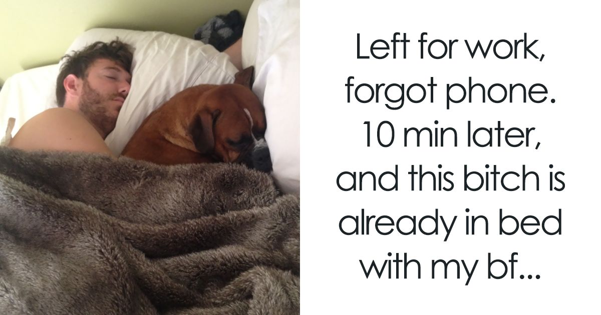 30 Shameless Pets That Stole Owner s Partner And Didn t Even Feel Sorry