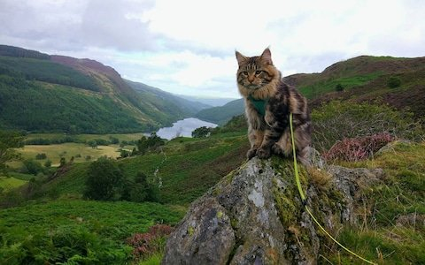 Ash the cat went for a three day hiking holiday in Snowdonia