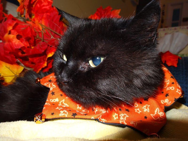 Happy Halloween Funny Cat s